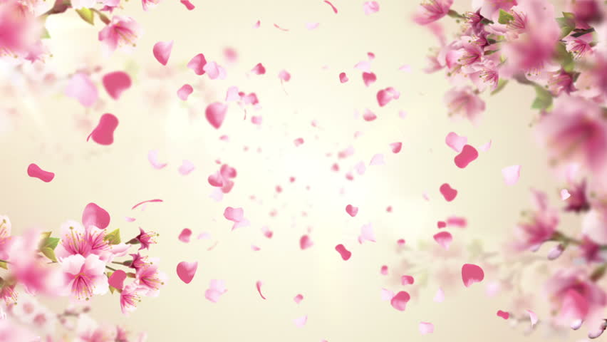 Animation of falling petals of sakura with flowers sakura waving on wind. Animation of seamless loop. - HD stock video clip