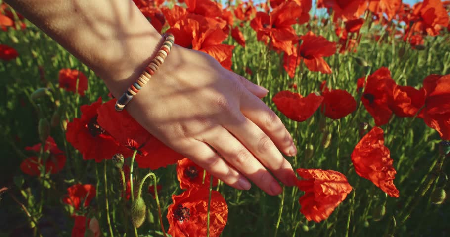 Close-up of woman's hand running through poppies field, crane shot. Slow motion 120 fps. Filmed in 4K DCi resolution. Girl's hand touching red poppy flowers closeup. Love nature concept. - 4K stock footage clip