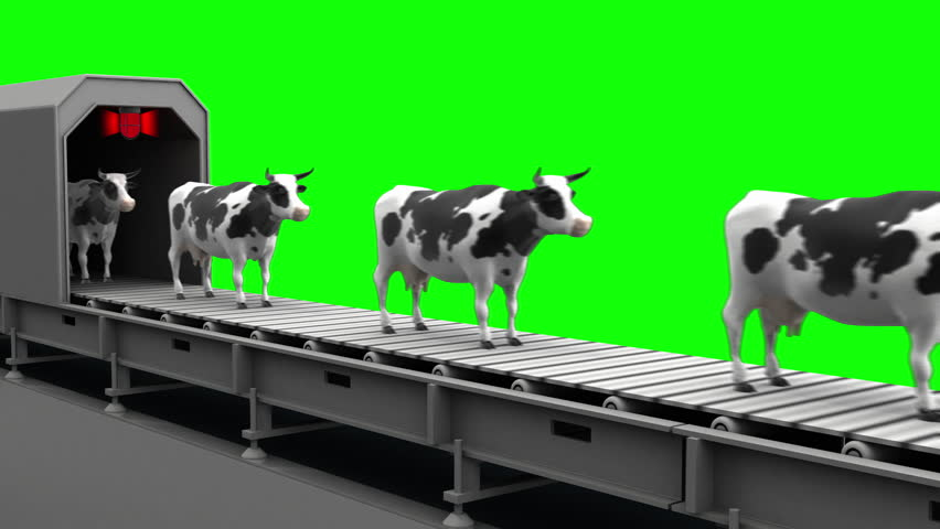 Cows on the conveyor belt, 4K. Seamless loop, green screen.