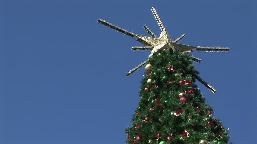 Camera tilts down to show a large outdoor Christmas tree  - HD stock video clip