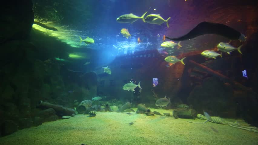 Old sunken ship and fish stock footage video 120727 for Sunken ship for fish tank