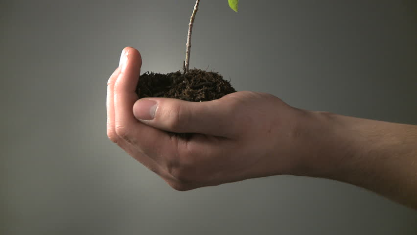 cupped hand holding a sapling