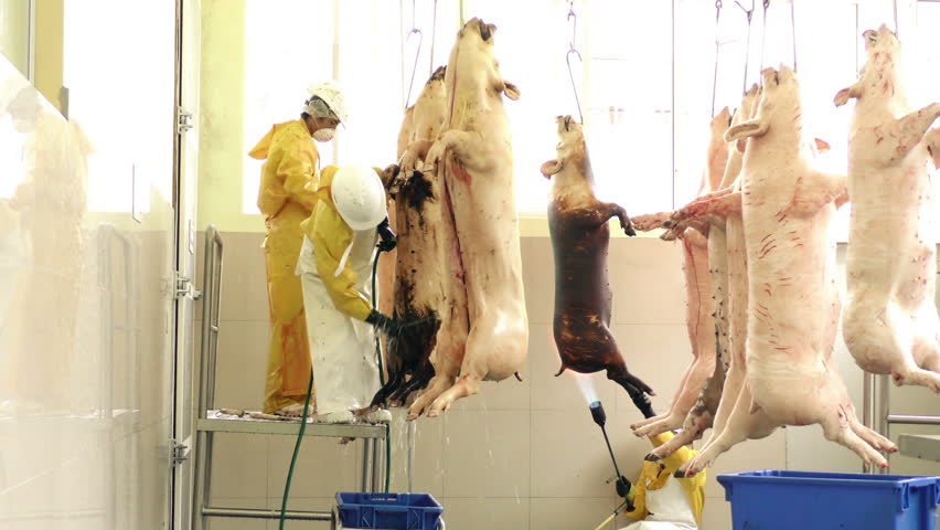 Butchers working in a medium sized slaughterhouse or abattoir performing manual operations