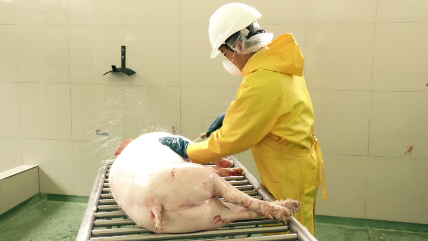 Worker cleaning a pig carcass with high water pressure in a slaughterhouse, wearing specific protection equipment