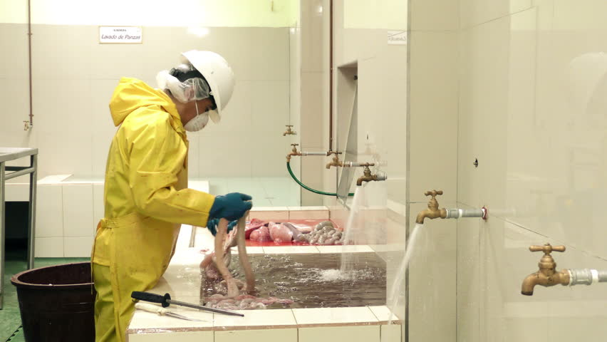 Slaughterhouse preparation room, worker sorting and cleaning animal intestines for further processing