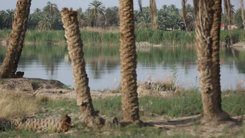 Palm trees on the banks of Euphrates River at Jurf Al Nasr, Iraq. in 2014, Jurf Al-Nasr (formerly Jurf Al Sakhar) witnessed fierce battles between ISIS and Iraqi army