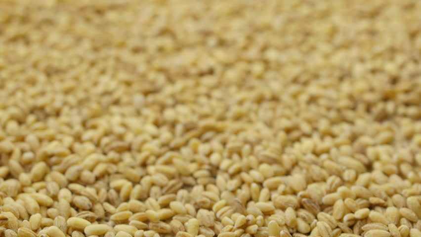 Pouring barley grains into plate. Close-up.