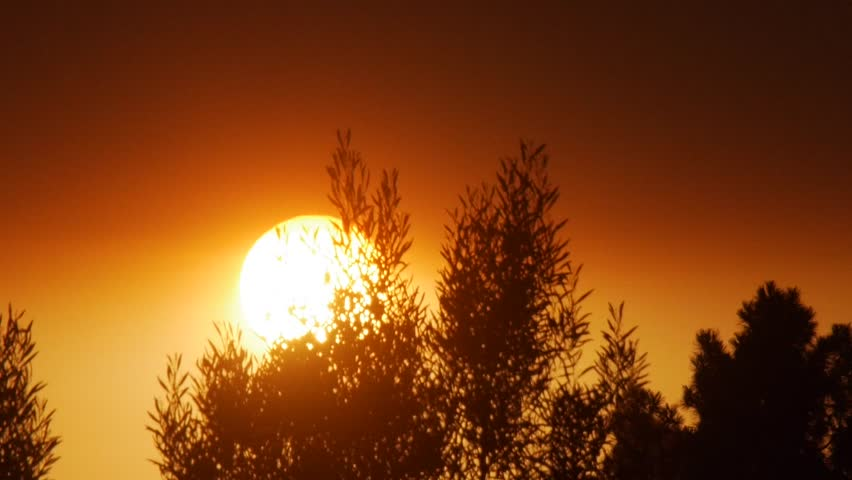 Richmond, California - August, 2015 - Timelapse of the sun setting behind trees.