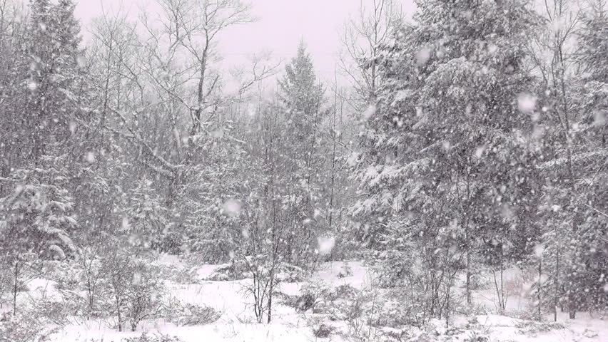 Large Snowflakes Falling During A Winter Storm In A Woodland Rural Setting Slow Motion