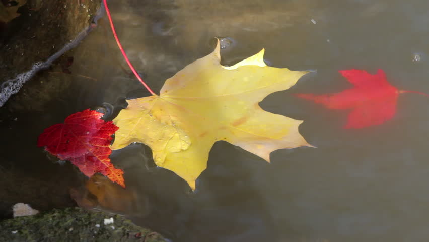 Image result for images of leaves floating down a stream