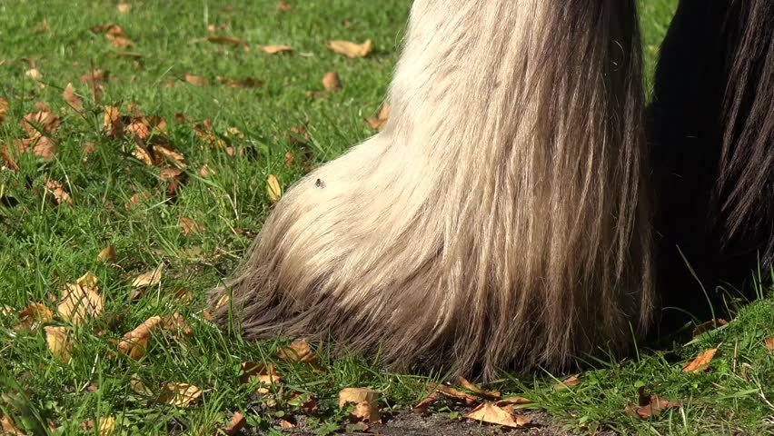 Hoof Definition Meaning