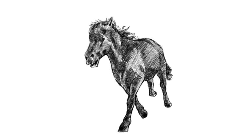 I draw horse running frame by frame loop 10 sec Full HD 1920x1080 Mov.(Jpeg) / Horse Running Front