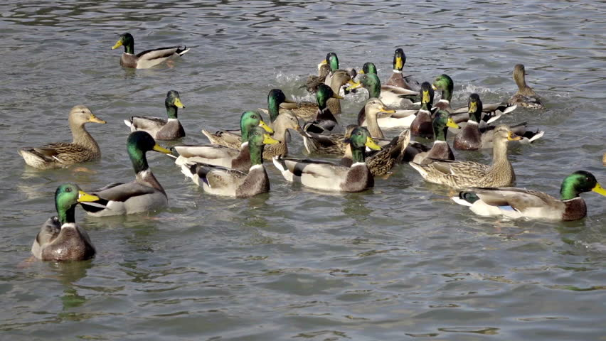 1920x1080 cabin lake ducks - photo #17