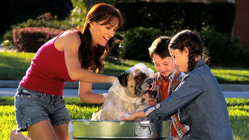 Young mom & her children bathing the family bulldog  in the garden - HD stock video clip
