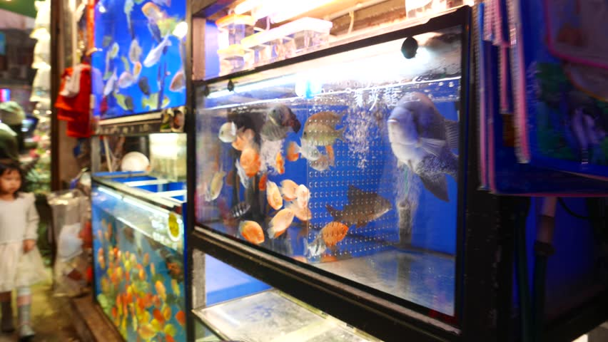 Fish are being held alive in small bowls filled with water for Live fish store