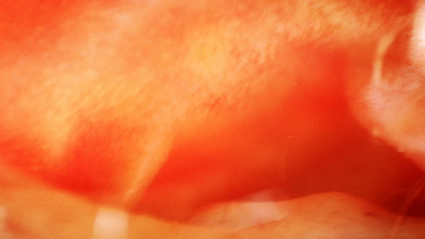 A close-up, strange composition of human skin. - HD stock footage clip