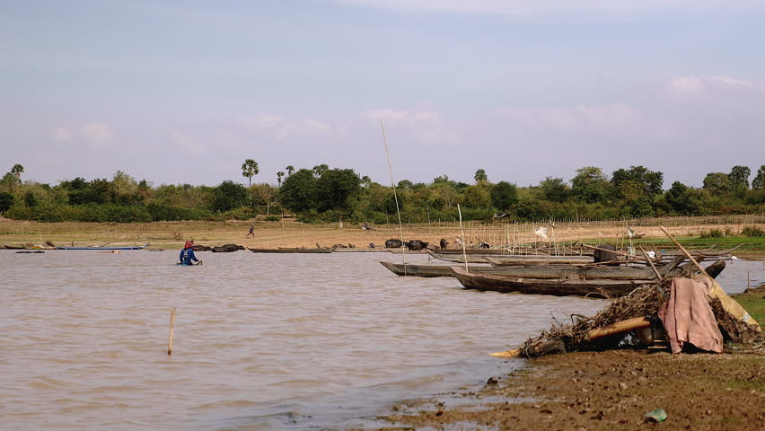 Shrimp fisherman lifting net out of lake water; Herd of water buffaloes getting out of water in the background,