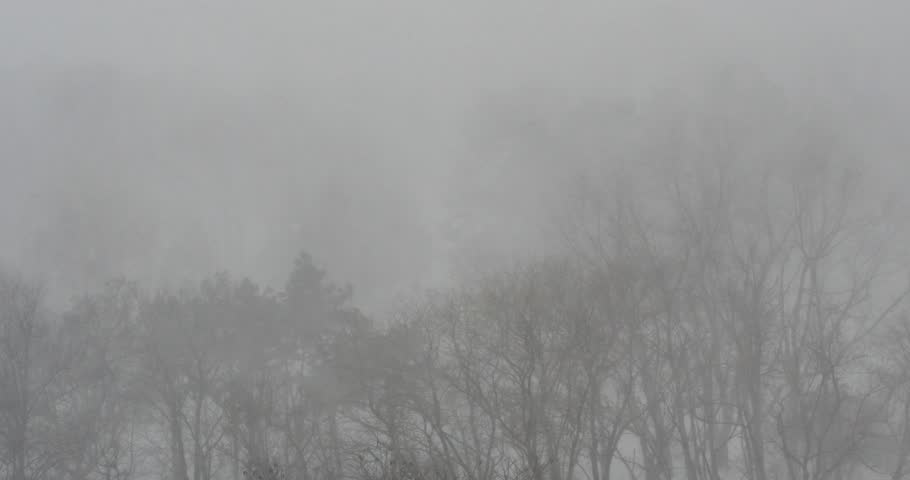 Snow blizzard in winter forest. View from above. - 4K stock video clip