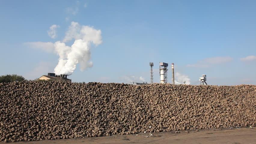 Sugar beet in sugar factory - HD stock footage clip