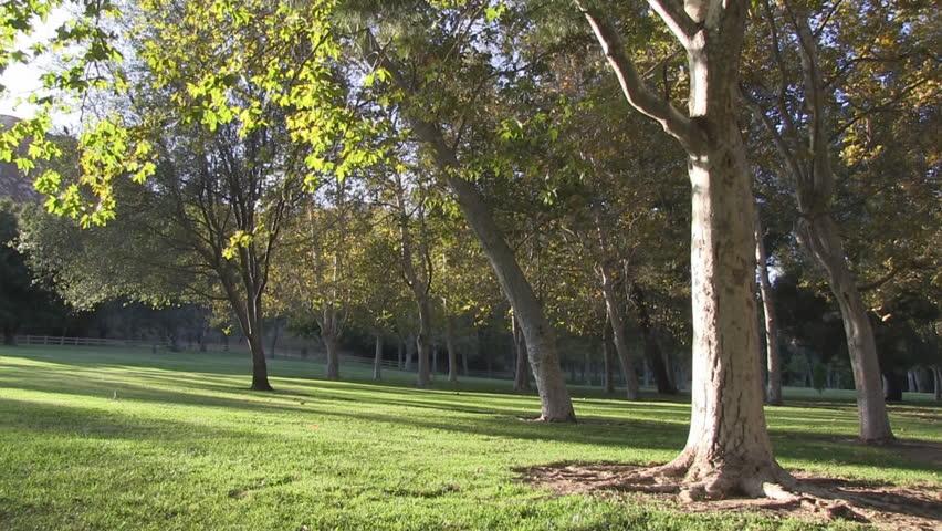 Peaceful park scene with a slight breeze.