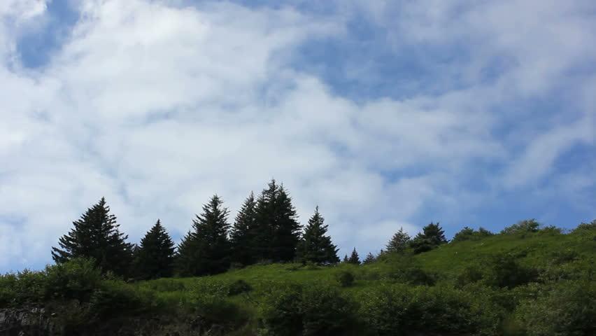 trees summer alaska - photo #8