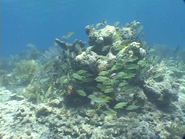 Coral reef fish florida keys caribbean colorful scuba for Florida reef fish