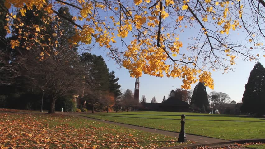 Panning view of College Lawn Under Tree in Autumn - HD stock video clip
