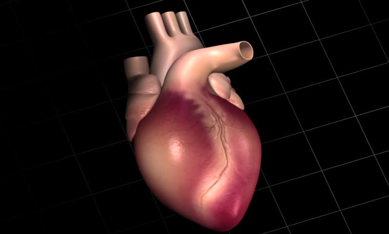 footage of a human heart with eco cardio gram pulse - SD stock footage clip