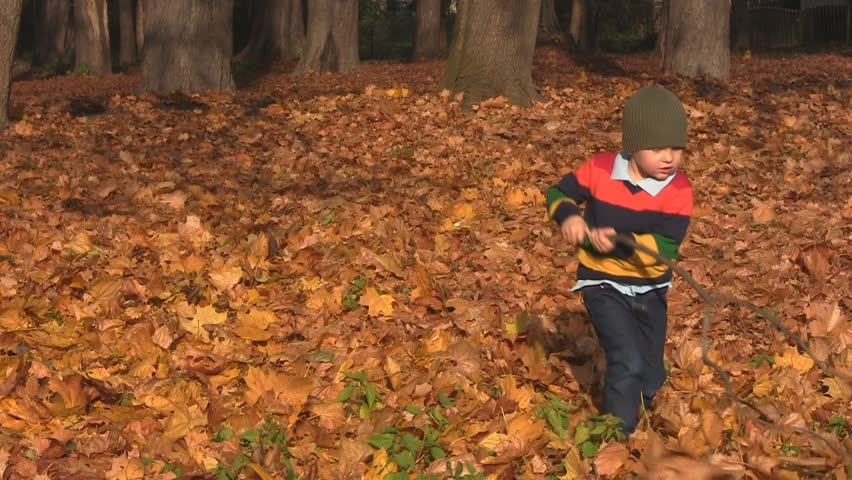 Boy robs leaves with branch - HD stock video clip