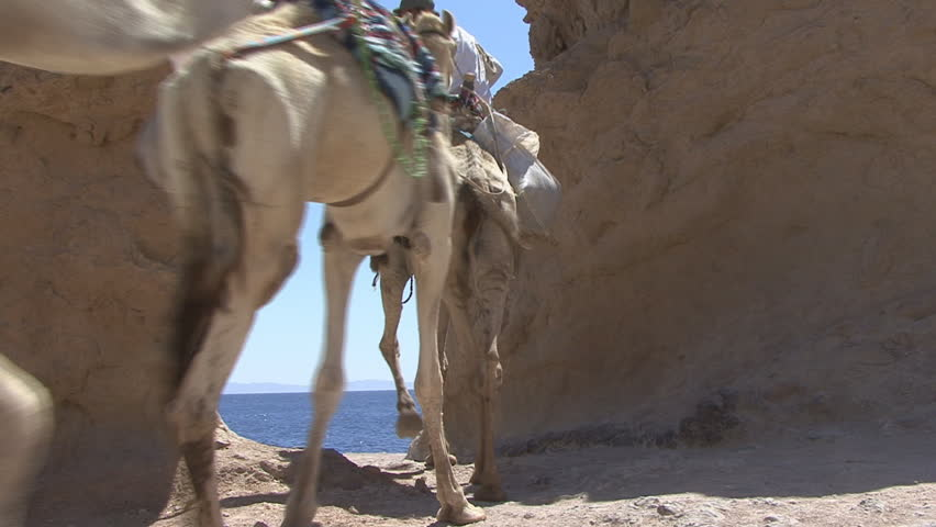 camels goes through the arch - HD stock footage clip
