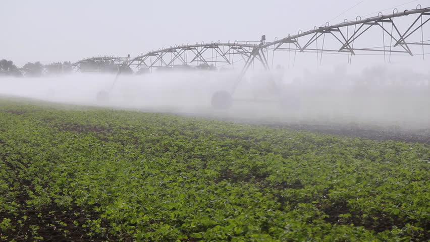 Irrigation of soybean in the field