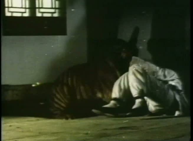 Tiger attacking a man in a room - SD stock footage clip