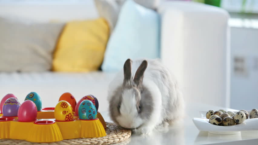 Adorable bunny surrounded with Easter eggs washing itself and sniffing the air, Easter series - HD stock video clip