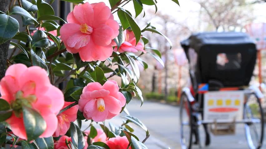 Rickshaw (jinriksha) in Kyoto, Japan.