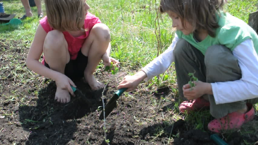 group of elementary kids and toddler baby planting and digging in the garden  - HD stock video clip