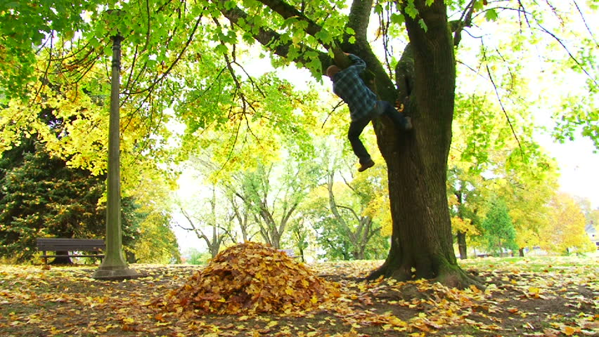 Smiling man climbs tree and free falls into large leaf pile in city park during Autumn. - HD stock footage clip