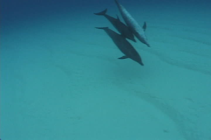 dolphin - SD stock footage clip