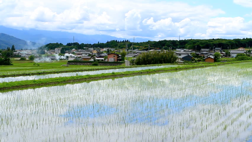 Paddy field in Nagano Prefecture, Japan.