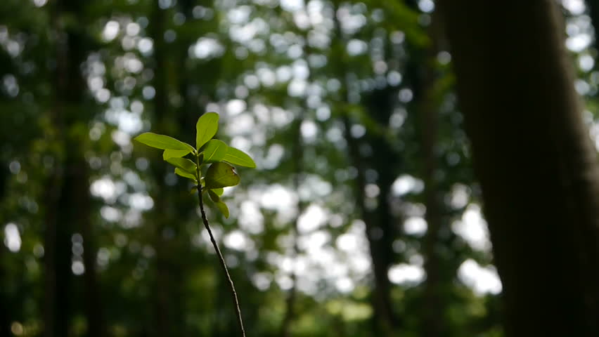Young Sapling Against Vast Forest