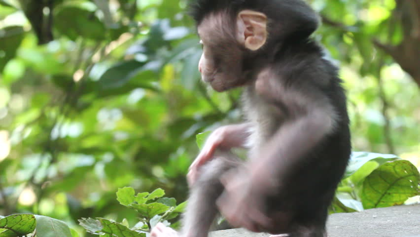 Monkey and baby - HD stock footage clip