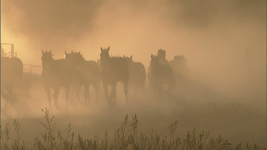 Backlit horses being herded down a country road by a cowgirl.