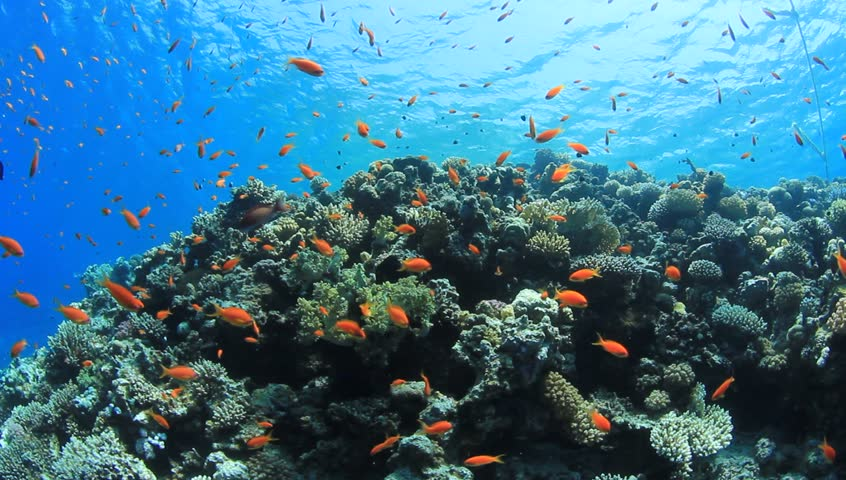 exotic fishes corals hd - photo #23