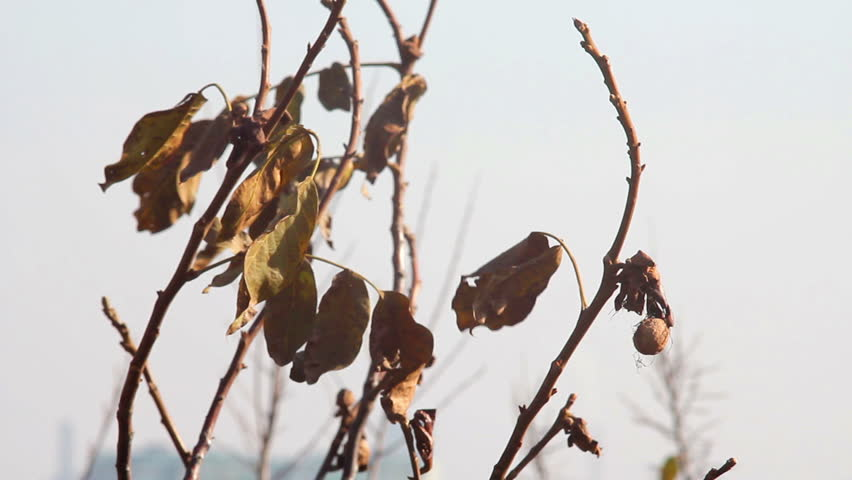 dried leaves on the tree in autumn