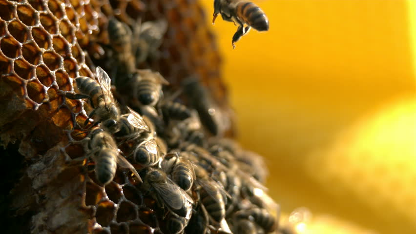 Bees are flying near honeycomb - Slow motion - HD stock video clip