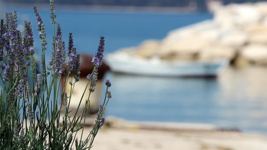 Lavander at the port
