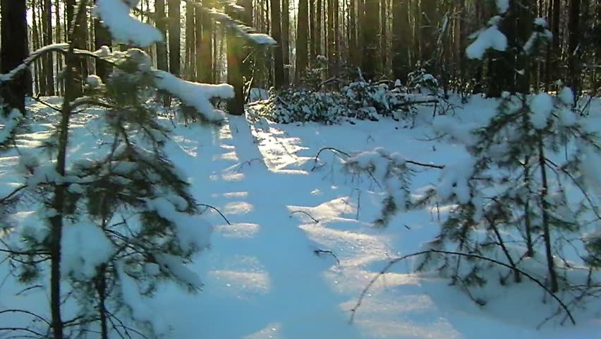 Walk through a sunny winter forest - HD stock footage clip