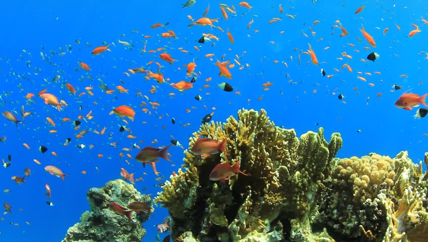 exotic fishes corals hd - photo #15