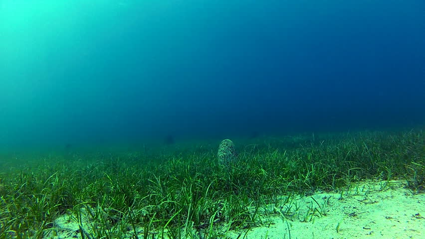 Rich seabed