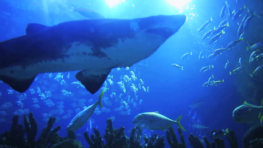 Underwater background (Focus on shark)