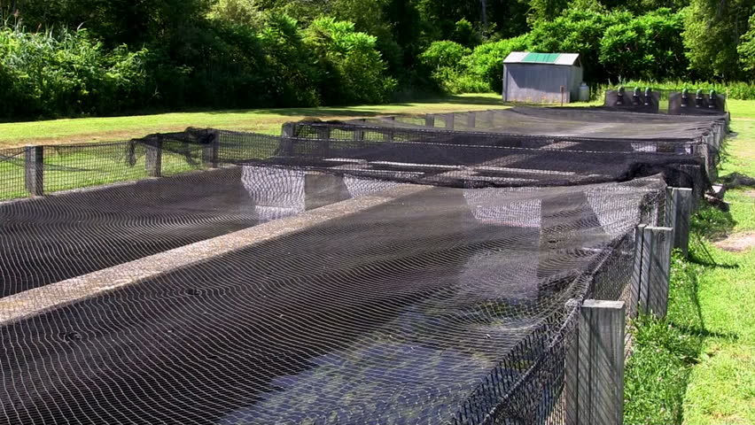 Mesh nets over raceway at fish hatchery on cape cod help for Illinois fish farms
